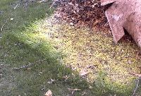 An article on how to use mulch to smother a path through your existing lawn (without digging!) and make a gravel path.  Nice