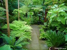 Garden Design Awesome Tropical Garden Landscaping Ideas 36 - Ordinary gardens nowadays don't give enough effect or life in the surroundings. There are different kinds of garden and one […]