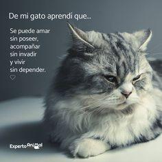 Mundo Animal, My Animal, I Love Cats, Cute Cats, Mr Cat, Cat Quotes, Beautiful Cats, Cat Day, Animal Kingdom