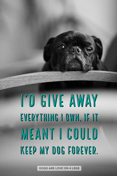 I'd Give Away Everything I Own, If It Meant I Could Keep My Dog Forever, Dog, Dog Quotes, Inspirational Quotes, Funny Quotes, Life Quotes #DogQuotes
