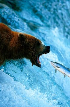 Fisher | Amazing Travel Pictures - Amazing Pictures, Images, Photography from Travels All Aronud the World