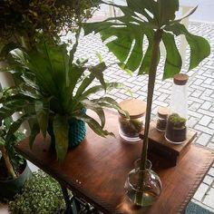 Vitrine selva  #urbanjungle #plants #curitiba