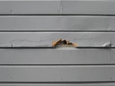 Rotted Wood Repair To Fix Damaged Siding Clapboard Siding, House Siding, Wood Siding, House Paint Exterior, Exterior Siding, Diy Exterior, Porch Repair, Siding Repair, Wood Repair