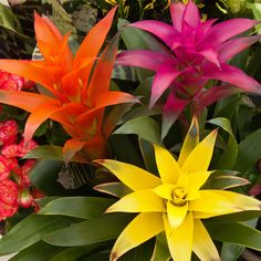 The Best Bromeliads for Indoors