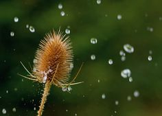 Rain Photography: how to take pictures of raindrops