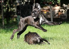 #Boxer #dog Boxer Breed, Boxer And Baby, Boxers, Pup, Babies, Dogs, Animals, Babys, Animales