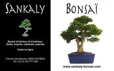 Un Sujet Exceptionnel Ligustrum Indonésien de 45 cm de hauteur, forme Sokan. Ce Bonsaï assez imposant est un sujet unique importé de l'Ile de Java en Indonésie en 2014 Bonsai disponible à la Vente en Ligne chez www.sankaly-bonsai.com  http://www.sankaly-bonsai.com/achat-vente-acheter-bonsai-interieur-sankaly-bonsai/3145-bonsai-ligustrum-indonesien-42-cm-140903-vente-de-bonsai-sankaly-bonsai.html