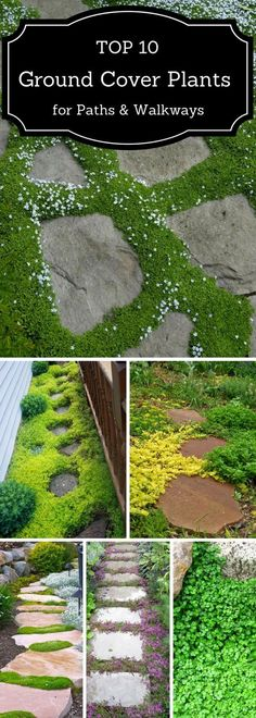 If you are looking for a way to beautify your pathway, check out these 10 plants that'll thrive there easily. garden pathway TOP 10 Plants and Ground Cover for Your Paths and Walkways Unique Garden, Diy Garden, Dream Garden, Lawn And Garden, Garden Projects, Garden Paths, Spring Garden, Shade Garden, Moss Garden