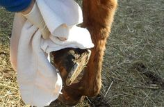 Dryness is your best friend. Really, though. (Photo via myhorse.com)
