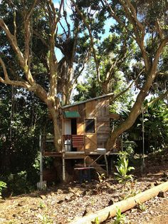 Tree house in our banyan tree????