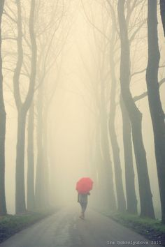 Walking with a red umbrella in a foggy path