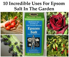 10 Incredible Uses for Epsom Salt in the Garden Awesome tips for keeping it organic in the garden and improving the health of the plants. I'm planning on adding it to the tomatoes and peppers this year.
