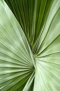 Aesthetic Photo, Aesthetic Pictures, Bismarck Palm, Mint Green Aesthetic, Mood Images, Texture Art, Leaf Texture, Green Wallpaper, Patterns In Nature