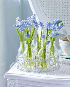 Muscari in vase - creative cut flowers Fresh Flowers, Spring Flowers, Beautiful Flowers, Tiny Flowers, Hyacinth Flowers, Draw Flowers, Flowers Nature, Flowers Garden, Jars