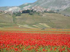 Castelluccio di Norcia, central Italy earthquake. My heart, my homeland.