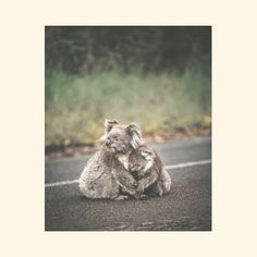 POLITICS, PR AND THE AUSTRALIAN BUSHFIRE CRISIS. | A collection of blog posts about all things PR published on www.rarapr.com | PR/Digital/Branding | Melbourne | raraPR