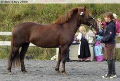Nordland Horse / Lyngen Horse - mare Øfstaasgry