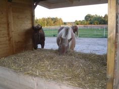 Anfang des Jahres 2012 wurden wir auf das Paddock Trail Konzept aufmerksam und waren sofort davon begeistert. Wir wussten seit dem Moment, dass wir diese natürliche Haltung auch für unsere Pferde umsetzen wollen. Nach einiger Zeit der Planung konnten wir bereits einige Ansätze des Paddock Trail Konzeptes umsetzen.