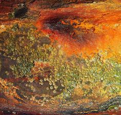 Rust ~ Paul Parsons