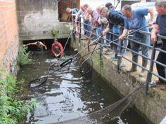 524 karpers gered in Munsterbilzen (Bilzen) - Het Belang van Limburg