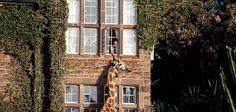 The Giraffe Manor in Nairobi: pet a giraffe from your room!