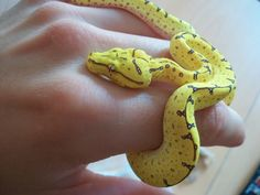 Animals Of The World, Animals And Pets, Baby Animals, Cute Animals, Pretty Snakes, Beautiful Snakes, Serpent Animal, Snakes For Sale, Indoor Dog Park