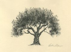 Olive Tree Drawing Pen and Ink Fine Art Print on Natural Paper From theinklab. $30.00