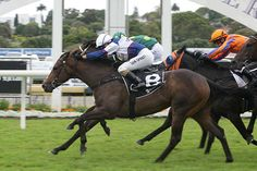 Hasahalo (NZ) 2014 B.f. (Savabeel (AUS)-Halloween (AUS) by Encosta de Lago (AUS) 1st Eclipse S (NZ-G3,1200mT,Ellerslie)