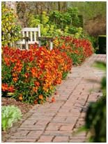 Download Free Garden and Landscape Project Plans – Here's a web site that organizes great do-it-yourself projects from all over the Internet. You'll find hundreds of projects, ideas and how-to guides to help you improve your home's landscape and gardens.