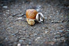 Trauuringe mit Schnecke | Claudia Pelny Fotografie, Hochzeitsfotografie Raum Bamberg, Nürnberg, Ansbach, Kronach Snail, Wedding Details, Bamberg, Snails, Wedding Photography, Pulley