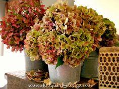 Various+Hydrangeas