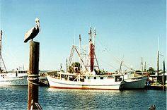 Tarpon Springs Property Records Street B Florida City, Florida Home, Tarpon Springs Florida, Property Records, Home Buying, Places To Visit, Greek, Boat, Sandbox