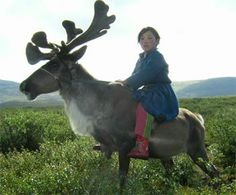 Satire Report: Reindeer Magic