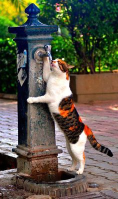 Drinking fountain for cats photo Water Company, Drinking Fountain, Bottled Water, Water Sources, Belle Photo, Mammals, Cats And Kittens, Animaux, Fuentes De Agua
