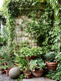 David Rosetzky and Sean Meilak is part of Courtyard garden Australian - A lusciously leafy little garden in Brunswick, Victoria proves that size isn't everything