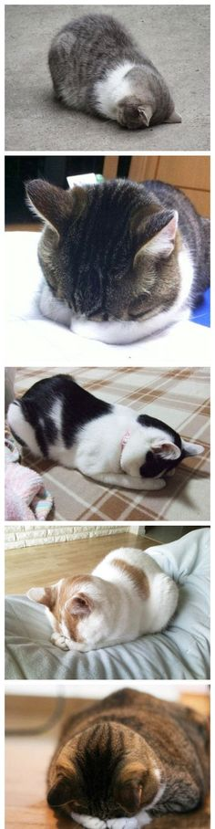 kitties sleeping on their faces: