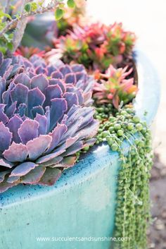 Learn how you can take better photos of succulents and other flowers!