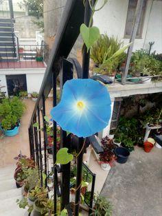 Uma linda flor abriu, para certas  pessoas é motivo de alegria