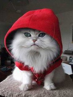 lil red riding cat