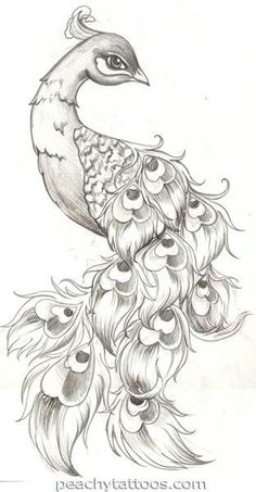 Peacock tattoo sketch this is really awesome Tatoo Art, Tattoo Drawings, Cool Drawings, Drawing Sketches, Drawing Ideas, Sketching, Drawing Tips, Sketch Tattoo, Pretty Drawings