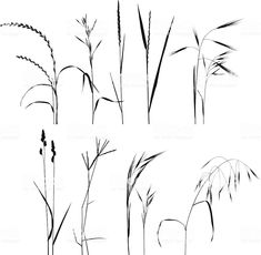 Pencil Drawing Patterns Grass Collection For Designers royalty-free grass collection for designers stock vector art Drawing Tips, Line Drawing, Painting & Drawing, Botanical Drawings, Botanical Illustration, Grass Drawing, Leaf Images, Flower Doodles, Plant Design