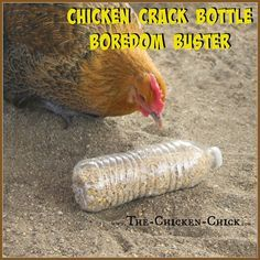 CHICKEN CRACK BOTTLES Use a drill bit to drill holes in empty plastic bottles, add chicken scratch (aka: chicken crack) and watch the fun break out! Provide several bottles to the flock at once to avoid conflict fowl penalties. - Gardening Go Chicken Garden, Chicken Life, Chicken Chick, Backyard Chicken Coops, Backyard Farming, Chickens Backyard, Chicken Pen, My Pet Chicken, Small Chicken Coops