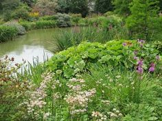 bog garden | bog garden can make a transition between land and water