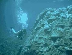 The Aquatic Biome info sheet by UCBerkeley