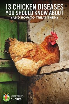 Chicken Coop - - 13 Common Chicken Diseases Every Chicken Keeper Should Know About (and How to Treat Them) Building a chicken coop does not have to be tricky nor does it have to set you back a ton of scratch. Raising Backyard Chickens, Backyard Chicken Coops, Keeping Chickens, Diy Chicken Coop, How To Raise Chickens, Backyard Farming, Chicken Garden, Chicken Life, Chicken Feed