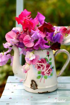 Colorful flowers in a vintage teapot by Jackbaby Sweet Pea Flowers, My Flower, Colorful Flowers, Beautiful Flowers, Deco Floral, Arte Floral, Belle Photo, Floral Arrangements, Flower Arrangement