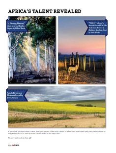 New Era, New Look . Great destinations, travel news, competitions, and much Canola Field, Kwazulu Natal, Game Reserve, What It Takes, Travel News, East London, Your Photos, Fields, Thinking Of You