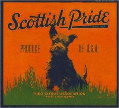 Pico Scottish Terrier dog Pride Orange Citrus Crate Label Art Print