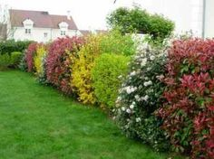 Haie diversifiée Creative Landscape, Landscape Design, Garden Design, Garden Hedges, Gravel Garden, Landscaping Trees, Privacy Landscaping, Formal Gardens, Outdoor Gardens