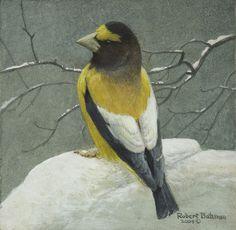 Evening Grosbeak Portrait